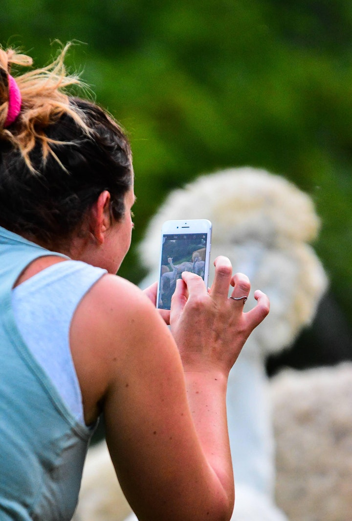 Immagine Meet My Alpaca: Open-day