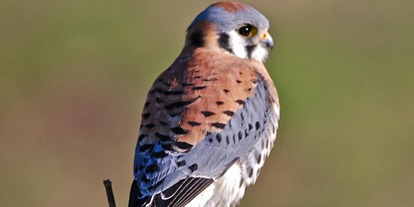 Fall Migration at the Point tickets
