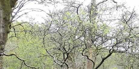 Upper Dane Living Landscape walk tickets