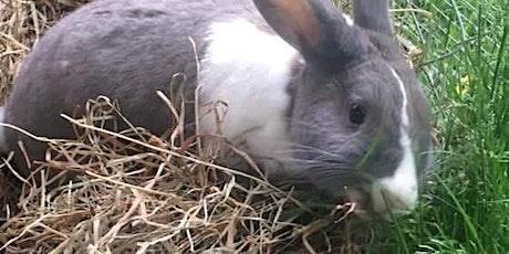 Hoppy Hour (A bunny play date) tickets