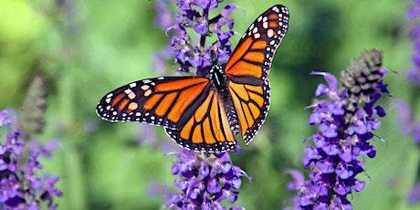 Helpful Habitats for Pollinators - Butterflies 2020 tickets