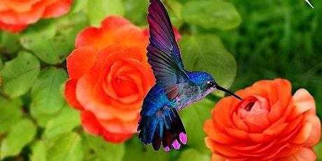 Helpful Habitats for Pollinators - Hummingbirds 2020 tickets