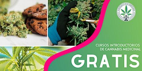 ONLINE Cursos Introductorios de Cannabis entradas