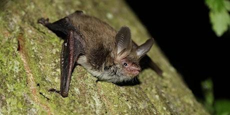 Bat walk at Trentabank  tickets