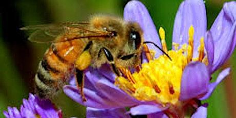 Beekeeping for Beginners tickets