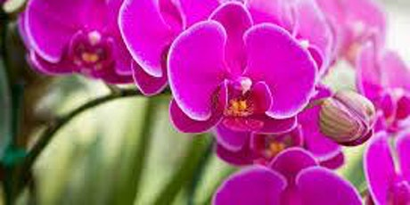 Basics of Growing Orchids tickets