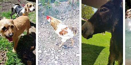Look Around The Farm (todas las edades) with NATALIE entradas