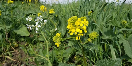 Edible Wild Plants and Foraging Online (Virtual) Class April 5 tickets