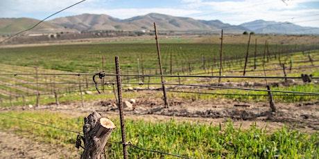 Virtual Vineyard Tour: Grafting Vines with Jim Stollberg tickets