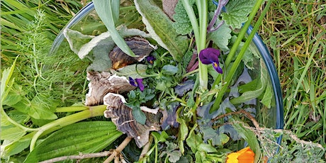 Herbs for 'flu, coughs and colds - what to use and when - Zoom call tickets