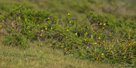 Spring Birding: Learning Bird Vocalizations tickets