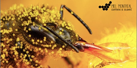 L'abeille dans tous ses états billets