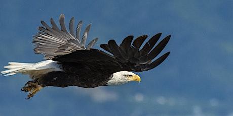 Using Long Lenses to Capture Birds In Flight - Tamron Webinar tickets