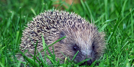 Hedgehogs tickets