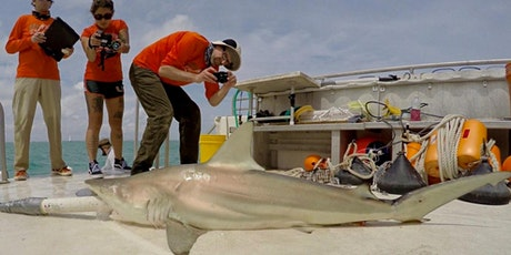 Creating 3D models of sharks for science and education tickets