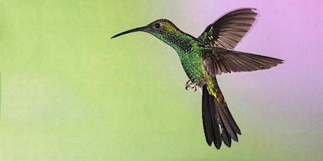 Ecuador Hummingbirds & Other Winged Wonders ~ Photo Tour 2021