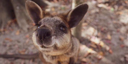 Australian Wildlife Q&A
