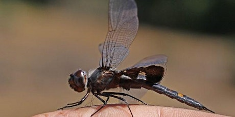 CANCELLED: Dragonflies of the Rogue River Preserve tickets