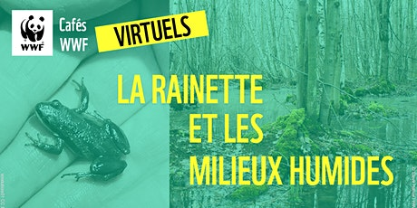CAFÉ WWF VIRTUEL // Rainette faux-grillon et milieux humides billets