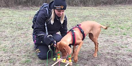 ONLINE-Vortrag (Indoor)-Beschäftigung für Hunde Tickets