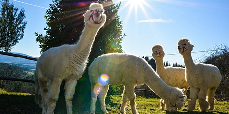 Meet My Alpaca: Open-day entradas