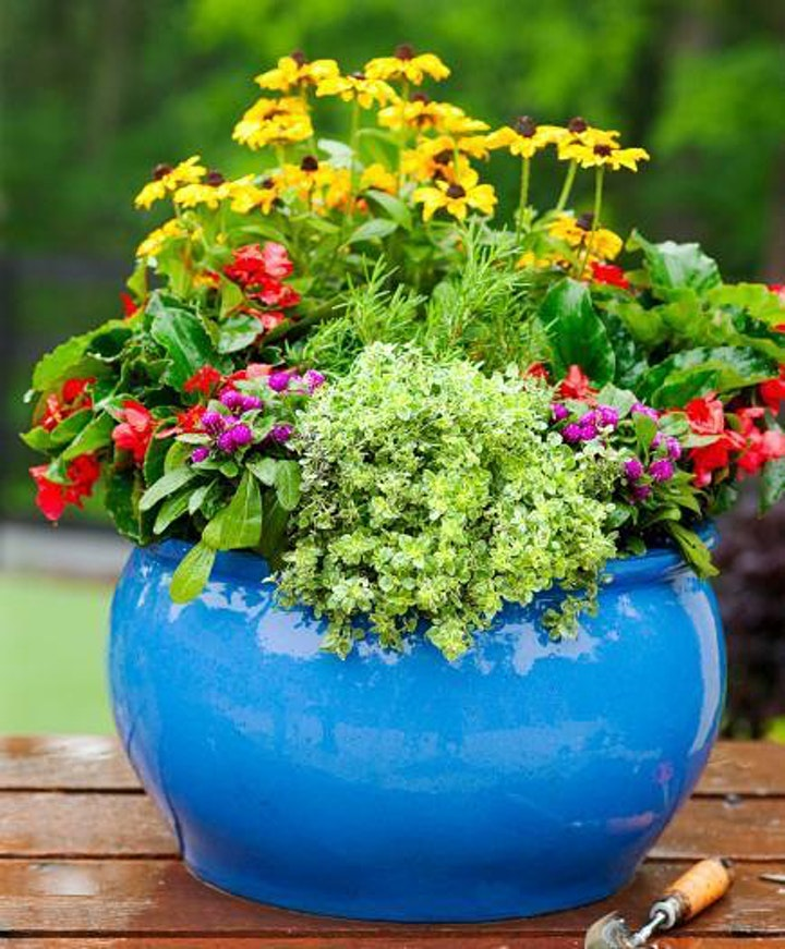Learn to Create a Beautiful Flower Container image
