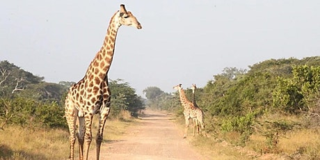 The Kordofan Giraffe Project - Chad tickets