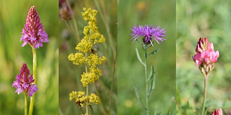 Grassland Plant Identification and Survey 2021 tickets