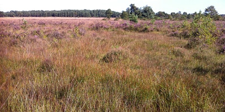 Heathland, Acid Grassland and Bogs - Vegetation Survey and Assessment 2021 tickets