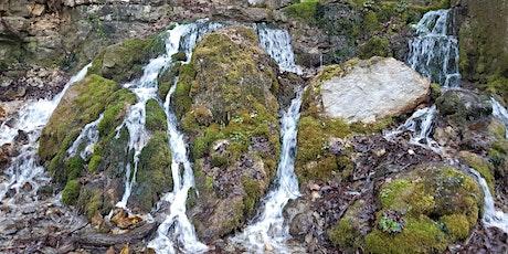 """Sa,06.06.20 Wanderdate """"Single Reise  Schwäbische Alb - Wasserfallsteig + Hohenwittlingensteig für 40+"""" Tickets"""