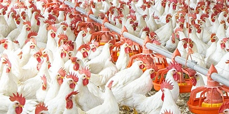 Poultry farming for food security and poverty eradication tickets