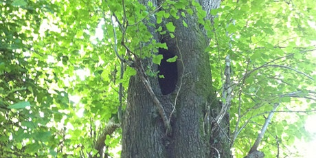 Assessing Trees for Bats 2021 tickets