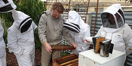 Online Introduction to Beekeeping Course - June tickets