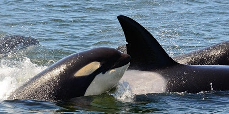 Fish and Chips: A Killer Whale Tales Science Activity tickets