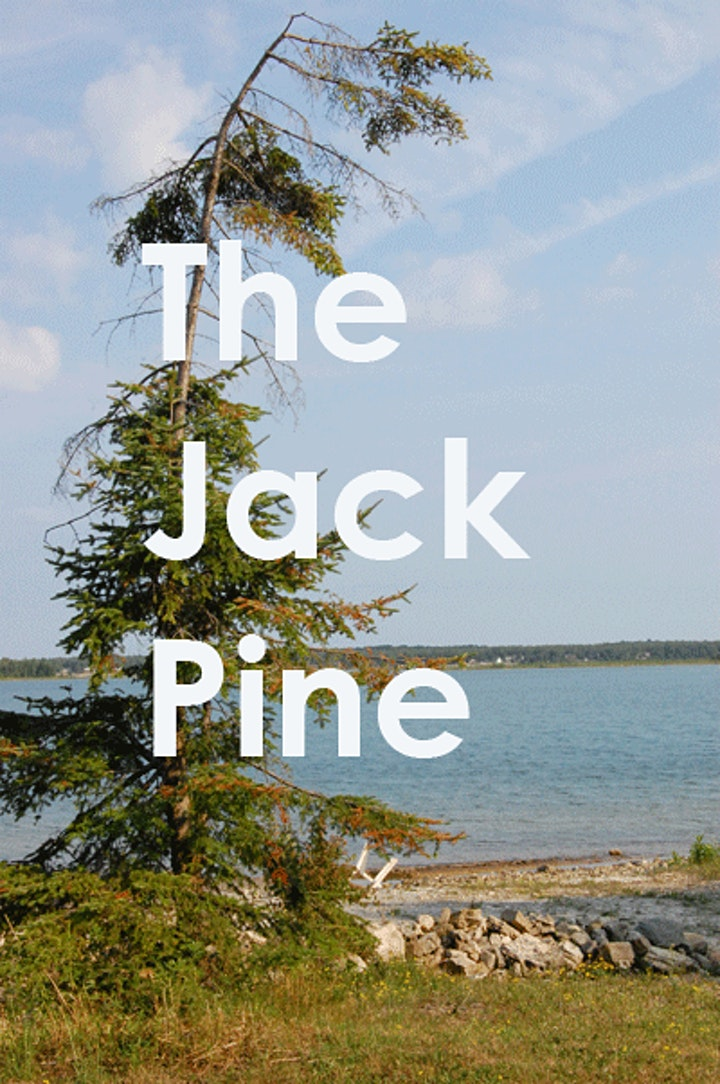 Learn to Paint a Jack Pine image