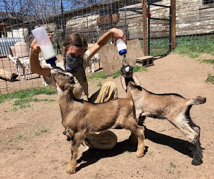 Virtual Baby Goat Bottle Feeding & Farm Tour! - Mountain Flower Goat Dairy image