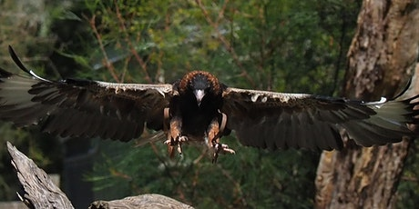 Photography Course 13-Wildlife at Healesville Sanctuary tickets