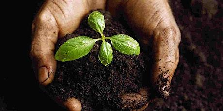 Backyard Compost Basics - a free webinar tickets