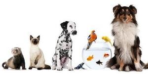 Vets, Pets & Essential Oils